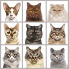 Cat breed quiz: guess the cats